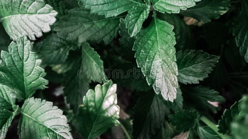 Green Leaves Free Public Domain Cc0 Image