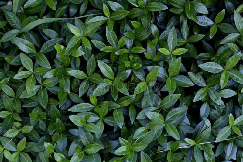 A green leaves from above stock photos