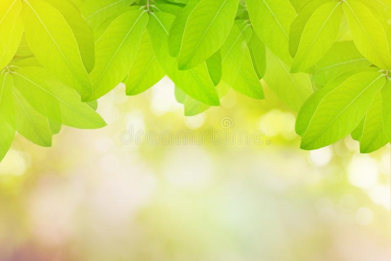 Green leaves with abstract blur bokeh spring or summer background royalty free stock images