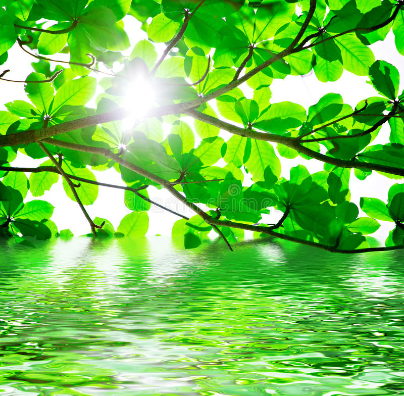Free Green Leaves And Water Stock Photography - 14986032