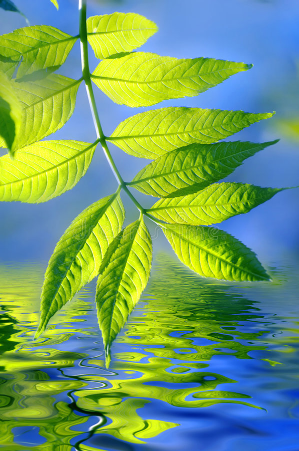 Free Green Leaves And Water Stock Images - 8185824