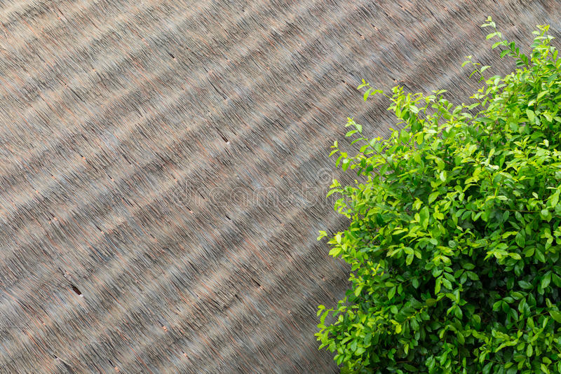 Green leaves on artificial thatch roof.  stock photos