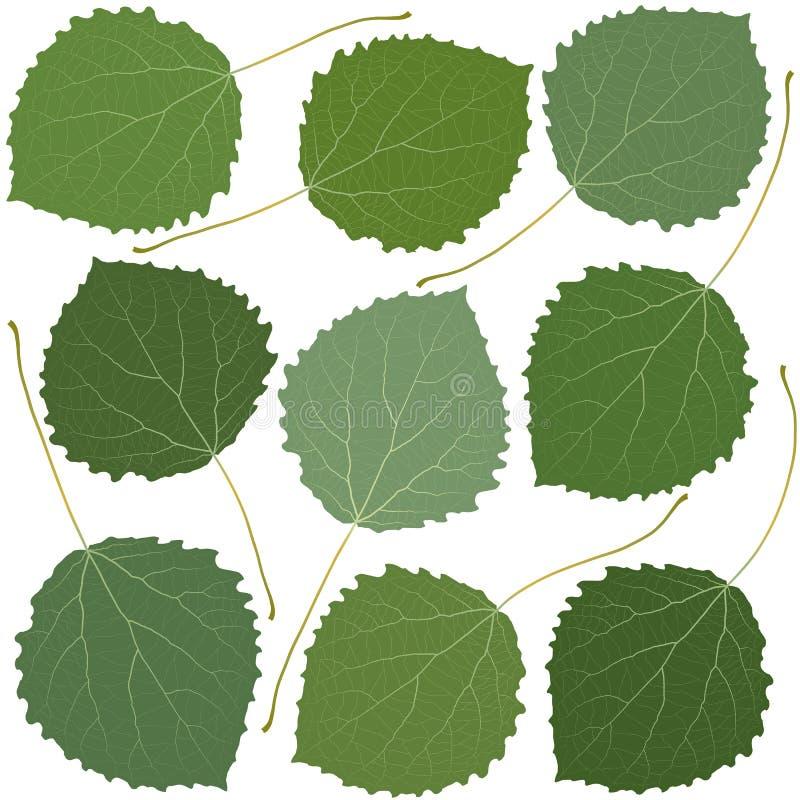 Green leaves aspen. Isolated on white background royalty free illustration