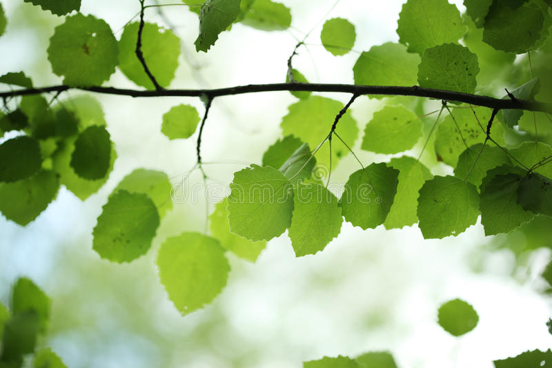 Download Green leaves background stock image. Image of bokeh, leafs - 14575091