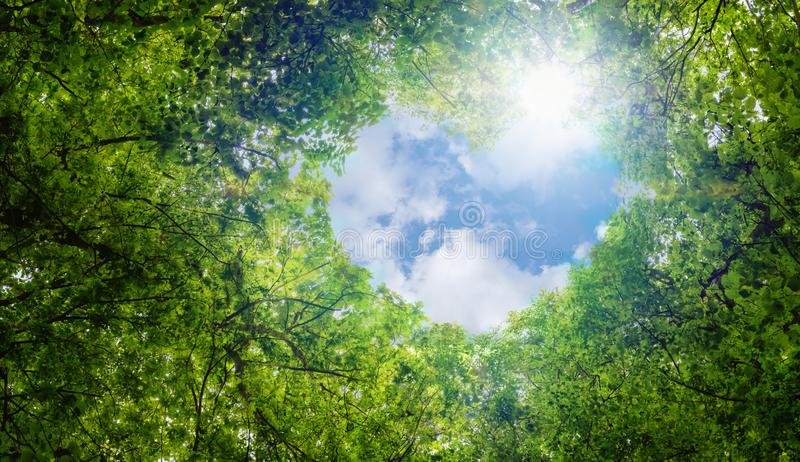 Green leaves background, blue sky heart shape cloud ecology concept idea eco love symbol background abstract stock photo