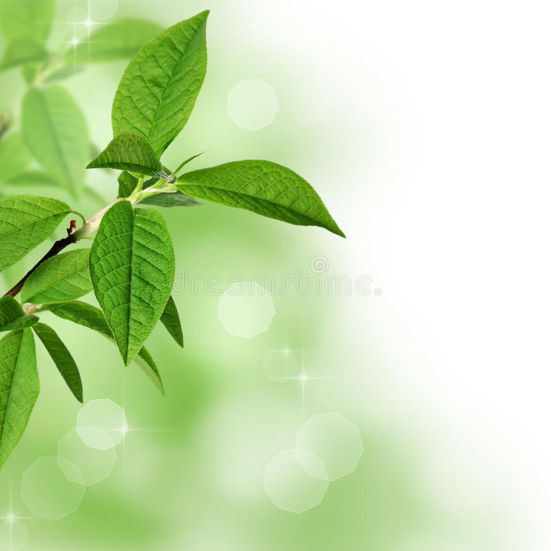 Green leaves background with bokeh royalty free stock photos