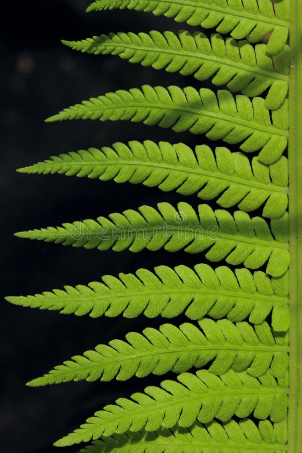 Green Leaves Background, Close Up. Beautiful Nature Background. Green Leaves, vertical shot. royalty free stock images