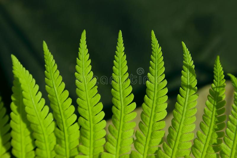 Green Leaves Background, Close Up. Beautiful Nature Background. Green Leaves, vertical shot. royalty free stock photo