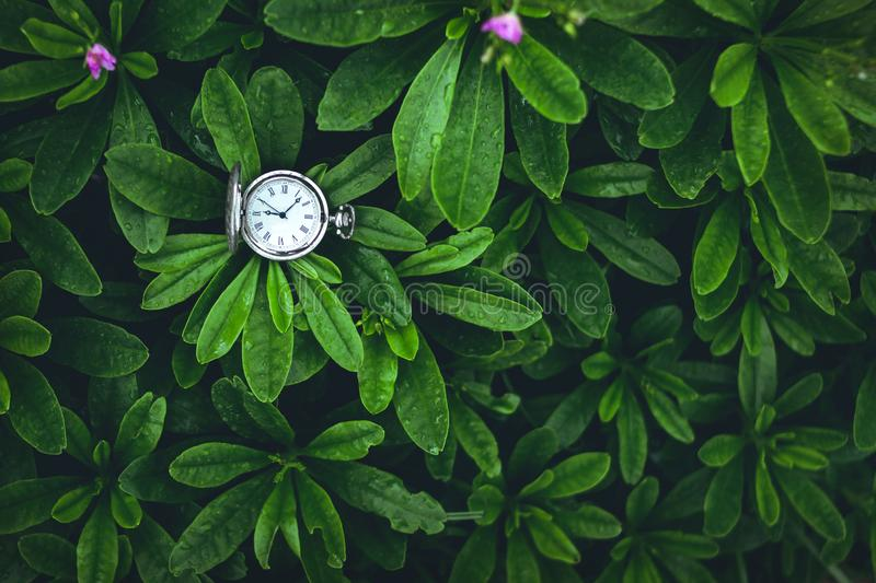 Green Leaves background and Old silver pocket watch clock in. Green Leaves background and Old silver pocket watch clock stock image