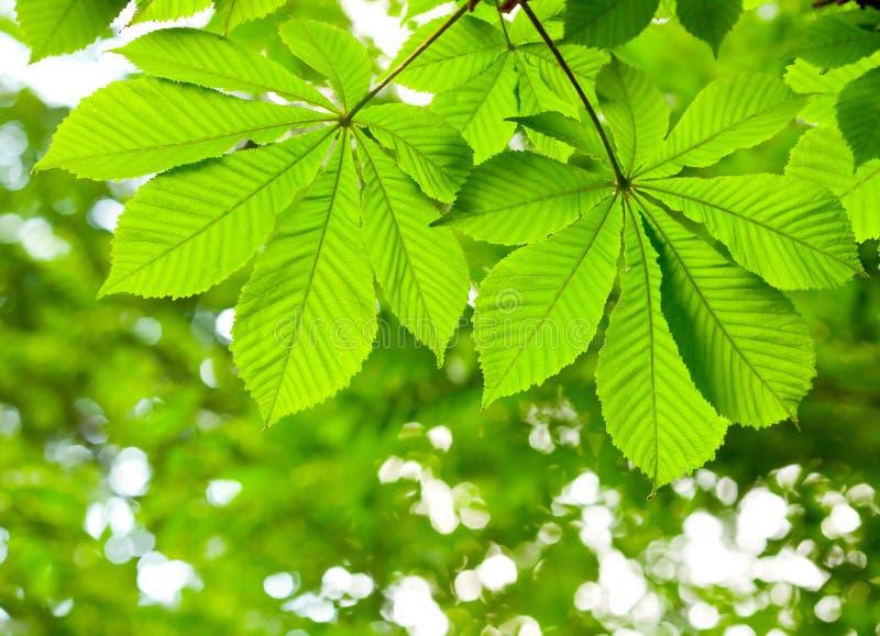 Download Green leaves stock image. Image of plant, frame, leaf - 30674053