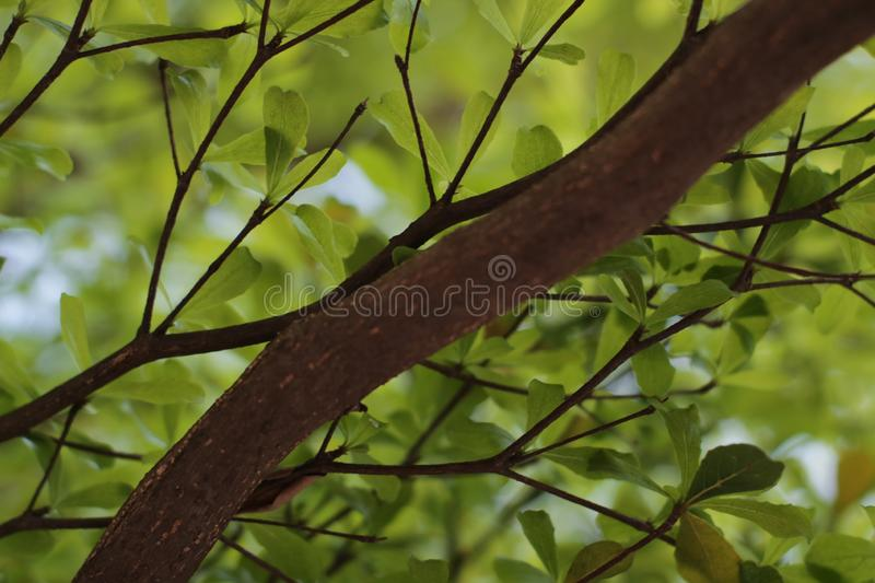 Green leaves background. There is space for your work. Photos taken in Bekasi city - Indonesia stock photography