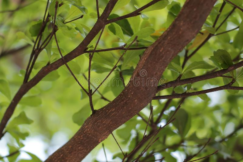 Green leaves background. There is space for your work. Photos taken in Bekasi city - Indonesia royalty free stock image