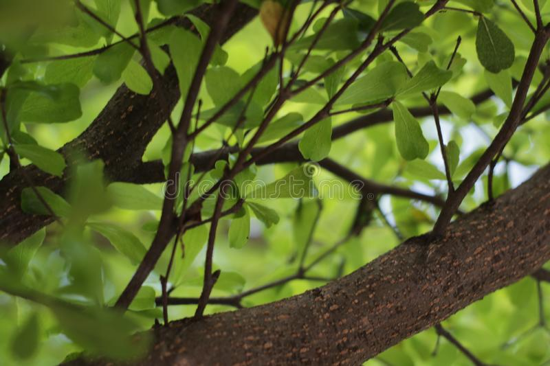 Green leaves background. There is space for your work. Photos taken in Bekasi city - Indonesia stock image