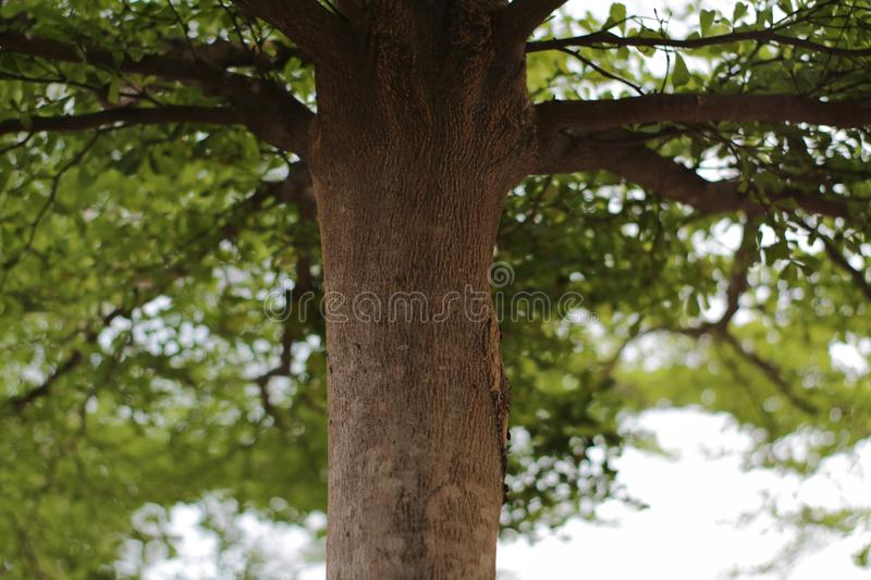 Green leaves background. There is space for your work. Photos taken in Bekasi city - Indonesia stock photos