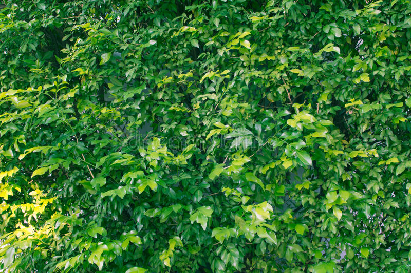 A green leaves background. stock photos