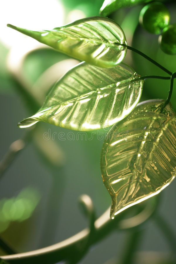 Green Leaves And Berries Royalty Free Stock Image