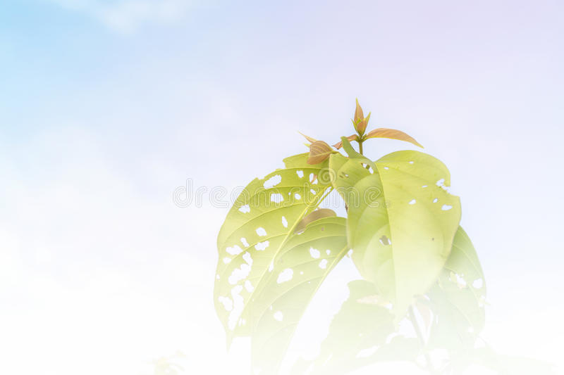 Green leaves and blur sky. Background royalty free stock images