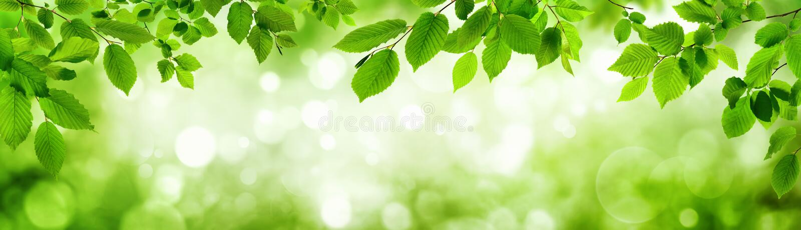 Green leaves and blurred highlights build a frame. Green leaves and blurred highlights in the background build a natural frame in panorama format stock image