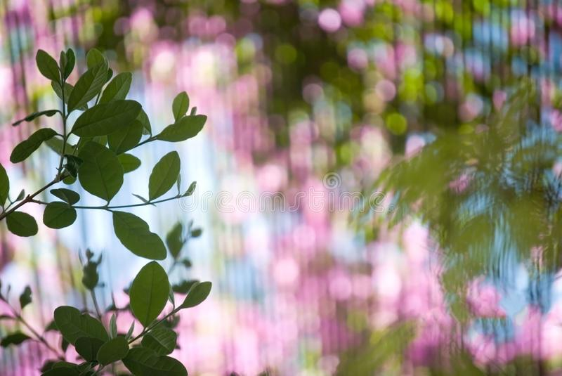 Green leaves with blurry pink and green background stock images