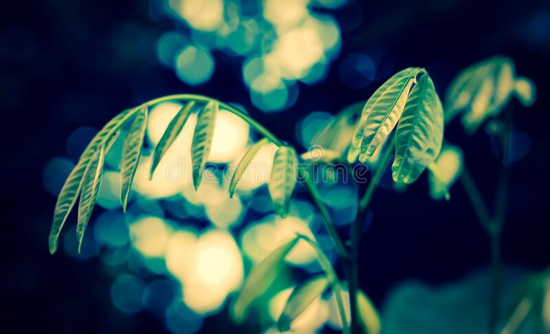 Green leaves with bokeh  spring nature background royalty free stock images