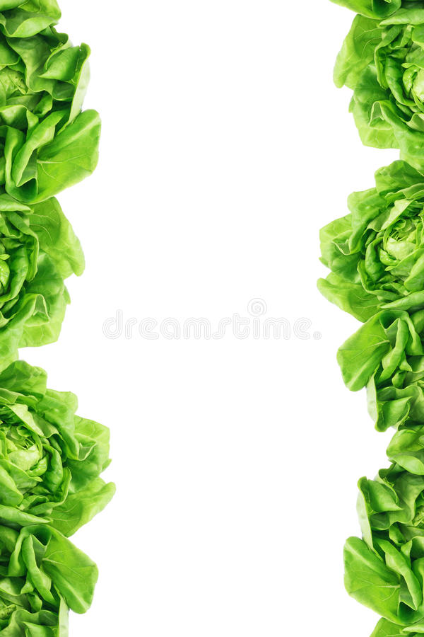 Green Leaves Border royalty free stock images