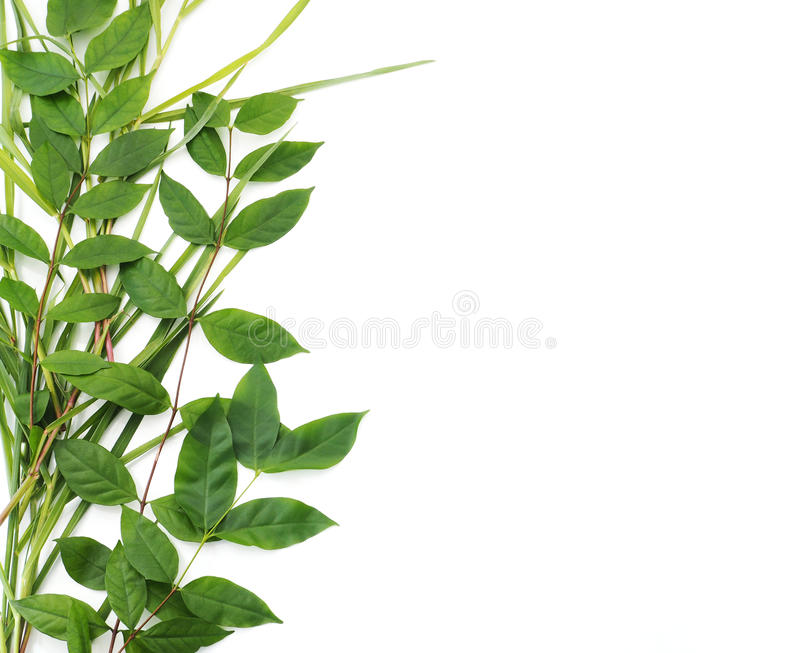 Green leaves border isolated on white background stock photos