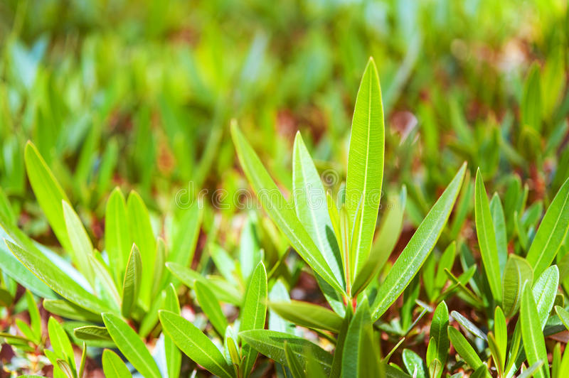 Download Green leaves of bush stock image. Image of deciduous - 30748385
