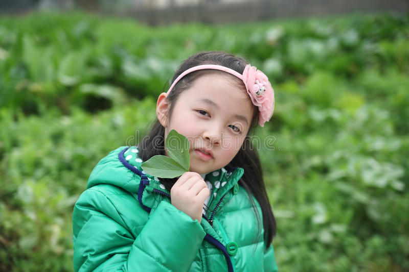 Green leaves with the children royalty free stock photo