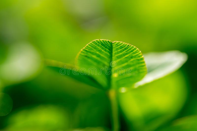 Green Leaves Close up. Green grass macro photography. Close up of green grass royalty free stock images