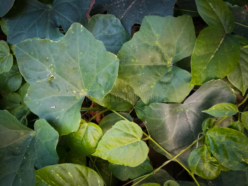 Green leaves cover. On the floor royalty free stock photography