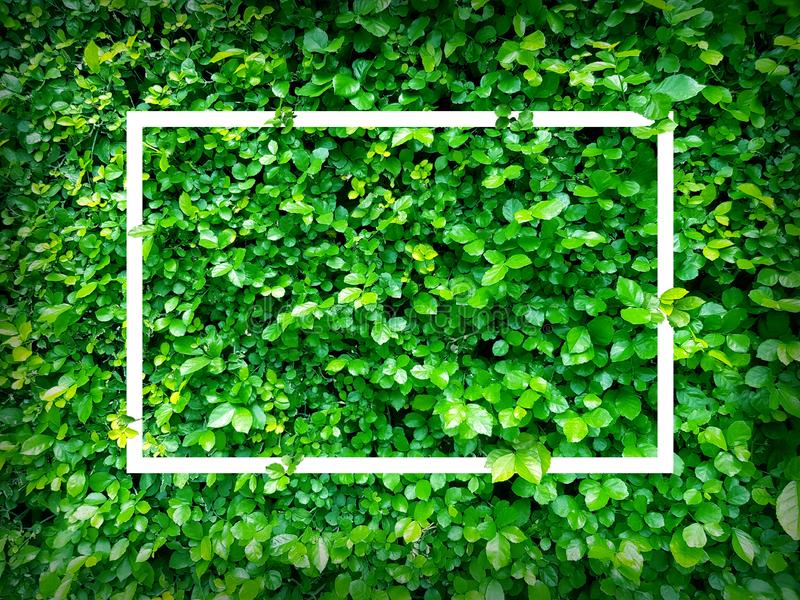 Green leaves. Creative layout made of leaves with paper card note or frame. A flat lay. Nature. Concept royalty free stock photo
