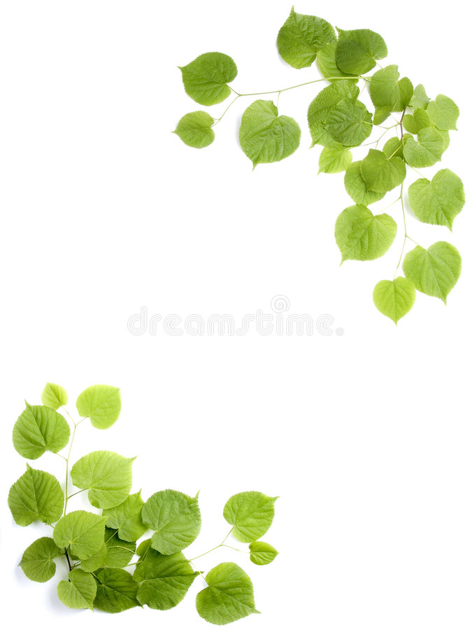 Green Leaves, Decorative Frame Royalty Free Stock Photo