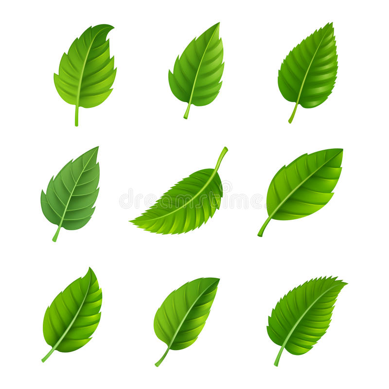 Green leaves decorative set vector illustration