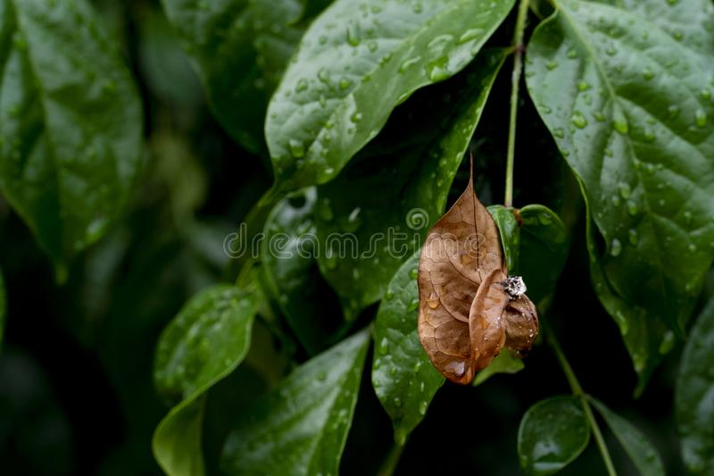 Green leaves with drop water of rain. stock image