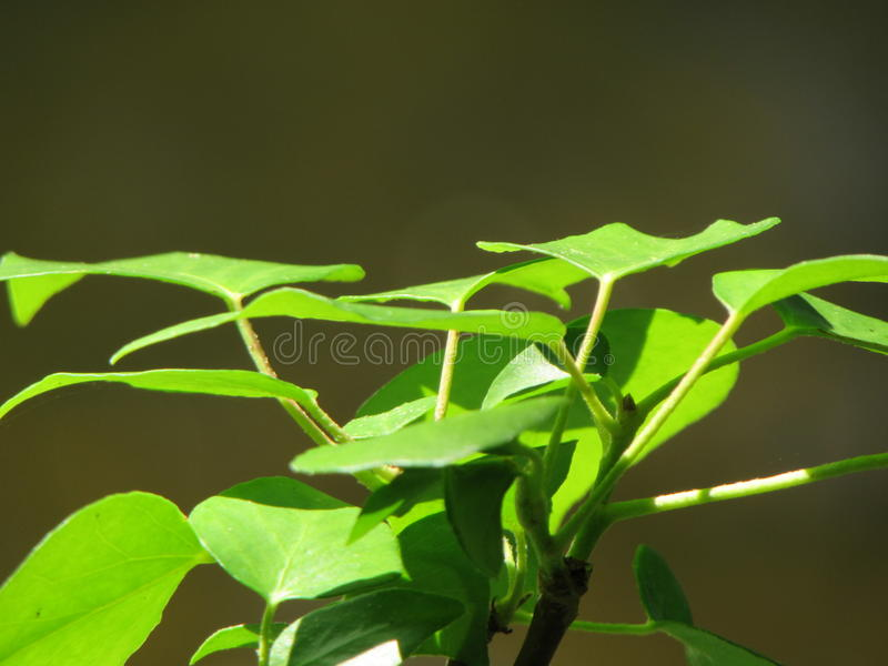 Green leaves. Eyecatching green foliage stock photos