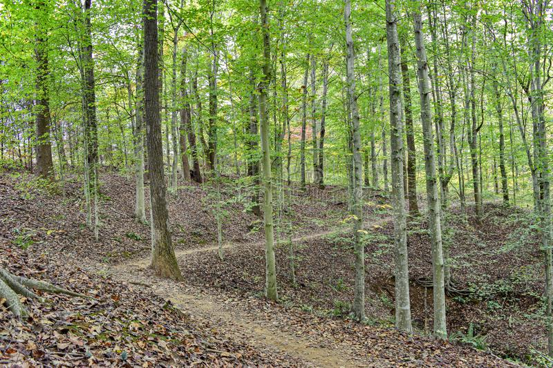 Green Leaves on Fall Day. Hiking trail among young beech tree forest in Charlottesville Virginia, creek, fall, leaves, trees, preddy, albemarle, trekking, bike royalty free stock image