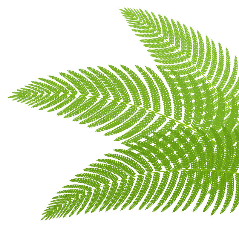 Download The Green Leaves Of A Fern. Stock Vector - Image: 19460646