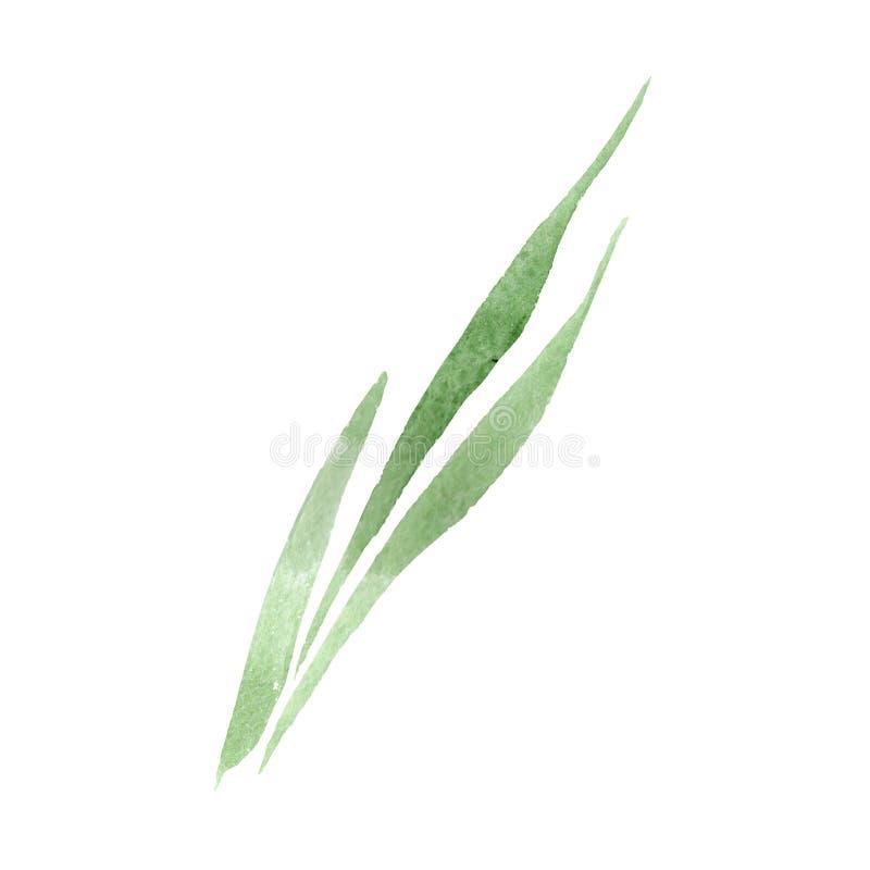 Green leaves floral botanical flower. Watercolor background illustration set. Isolated leaf illustration element. Green leaves floral botanical flower. Wild vector illustration