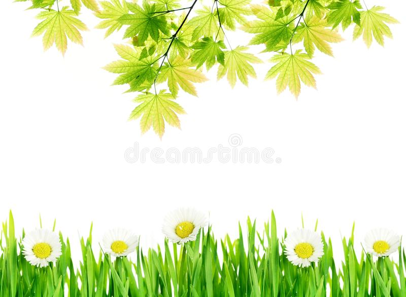 Green leaves with flowers background stock photos