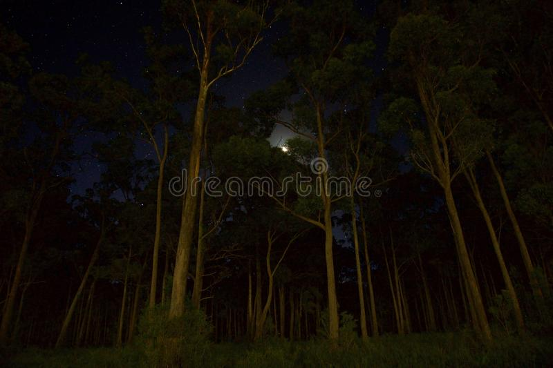 Green Leaves Forest Trees during Nighttime stock photography