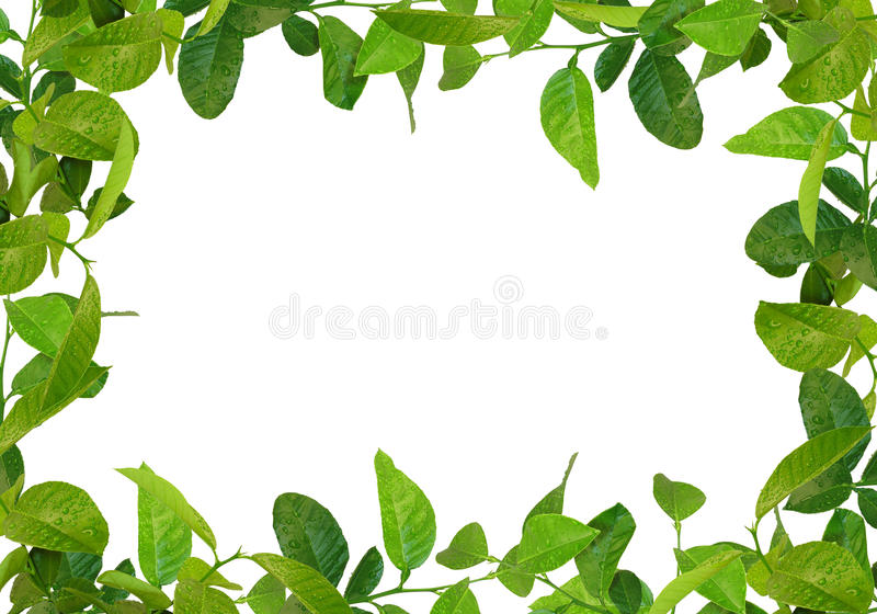 Green leaves frame stock images
