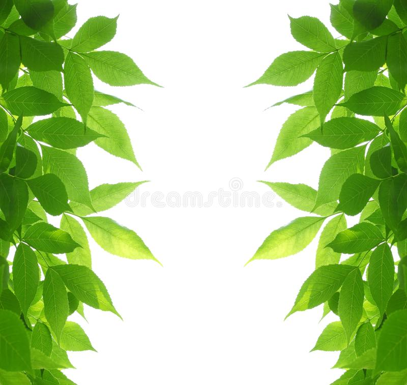 Green leaves frame stock photography