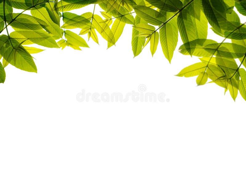 Download Green leaves frame. stock photo. Image of frame, spring - 15597466