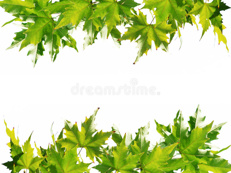 Download Green Leaves Frame Stock Photos - Image: 7349183