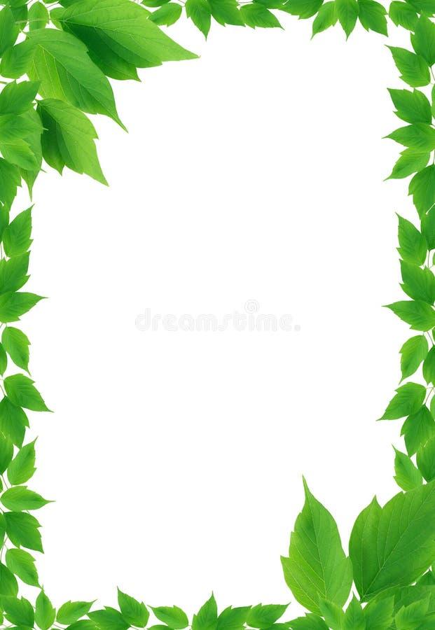 Green Leaves Frame stock photos