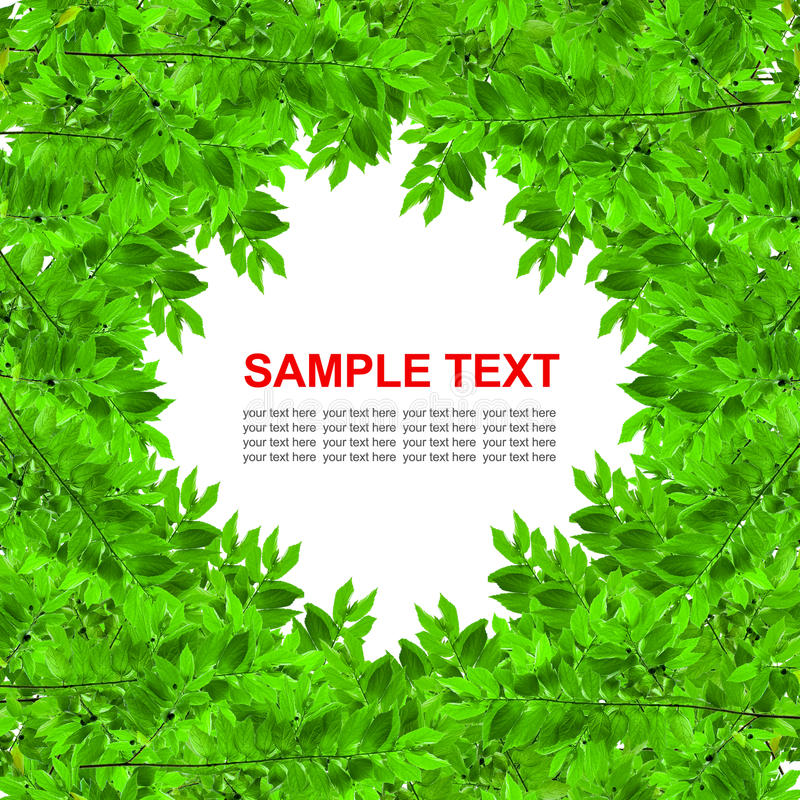 Download Green Leaves Frame Isolated Stock Image - Image: 18127505
