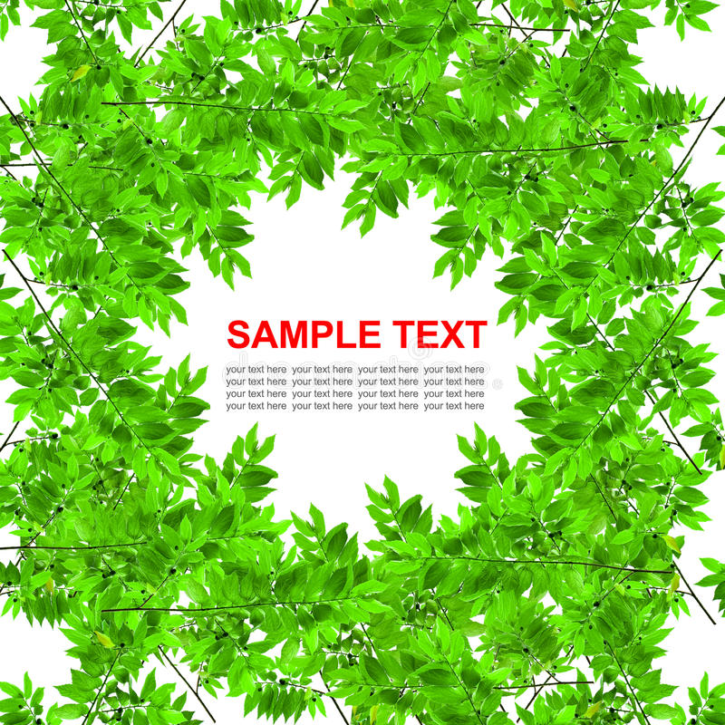 Download Green Leaves Frame Isolated Stock Image - Image: 18127551