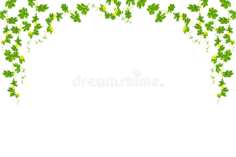 Green leaves frame isolated on white background ,copy space for stock illustration