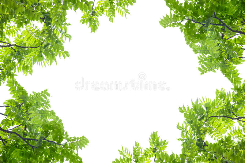 Green leaves frame on white background. royalty free stock photo