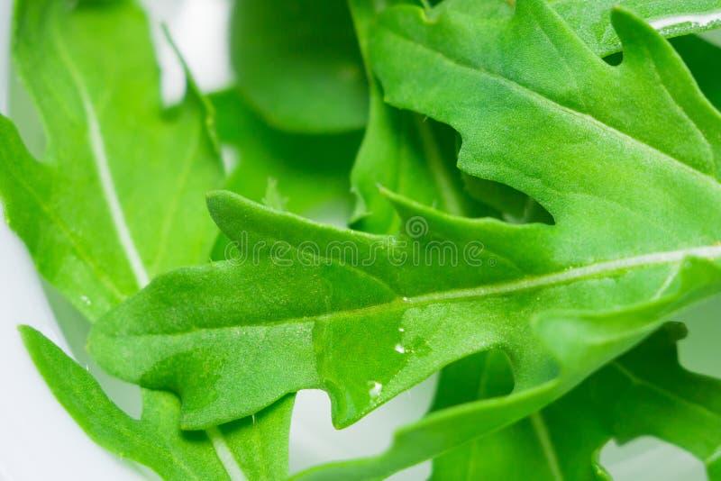 Green leaves fresh arugula stock image